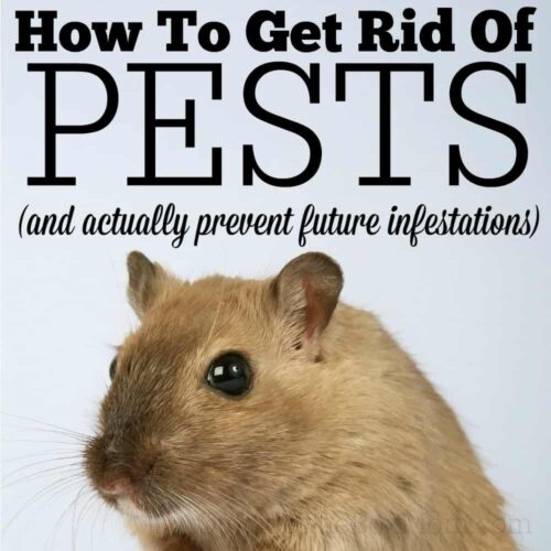 Ways to Getting Rid of Pests Inside Your Office